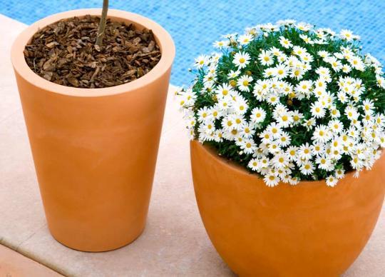 Venkovní květináře se samozavlažováním